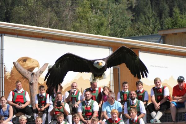 Bez Imst / js_greifvogelpark_umhausen_(2) / Zum Vergrößern auf das Bild klicken